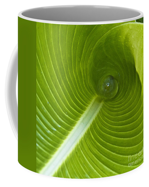 Heiko Coffee Mug featuring the photograph Leaf Tube by Heiko Koehrer-Wagner