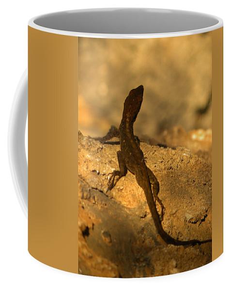 Lizard Coffee Mug featuring the photograph Leapin' Lizards by Trish Tritz