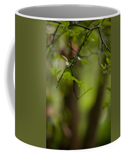 Tree Coffee Mug featuring the photograph Leaves And Thorns by Mike Reid