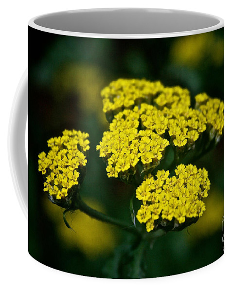 Plant Coffee Mug featuring the photograph Lemon Lace by Susan Herber