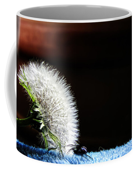 Dandelion Coffee Mug featuring the photograph Let's Investigate by Adam Vance