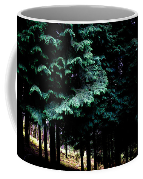 Light Coffee Mug featuring the photograph Light Forest by Edgar Laureano