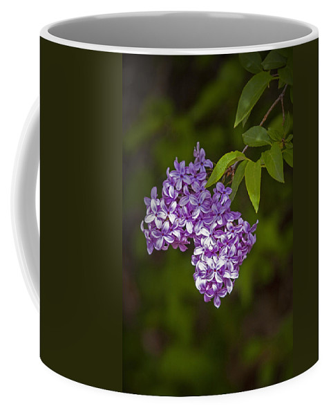 Art Coffee Mug featuring the photograph Lilac Flower Blossoms No. 319 by Randall Nyhof