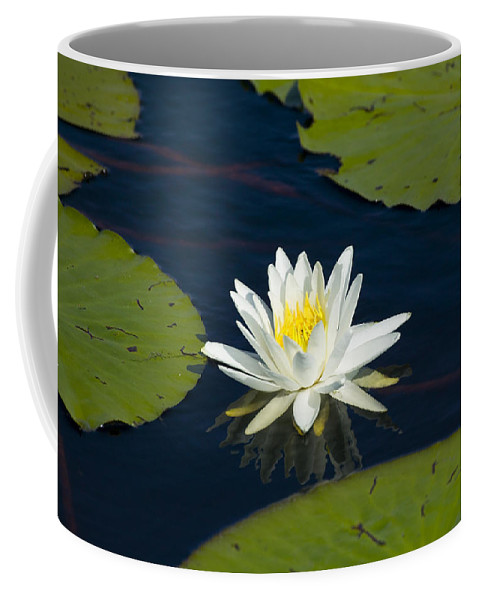 Lily Pad Coffee Mug featuring the photograph Lily Pad And Flower by Rich Franco