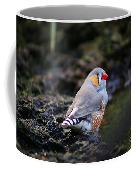 Birds Coffee Mug featuring the photograph Little Red Beak by Randy Harris