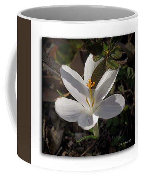 Brian Wallace Coffee Mug featuring the photograph Little White Flower by Brian Wallace