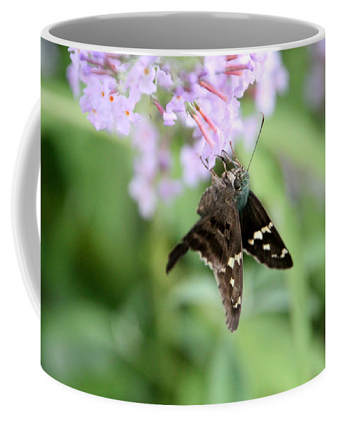 Long Tailed Skipper Coffee Mug featuring the photograph Long Tailed Skipper - Urbanus Proteus by Ericamaxine Price