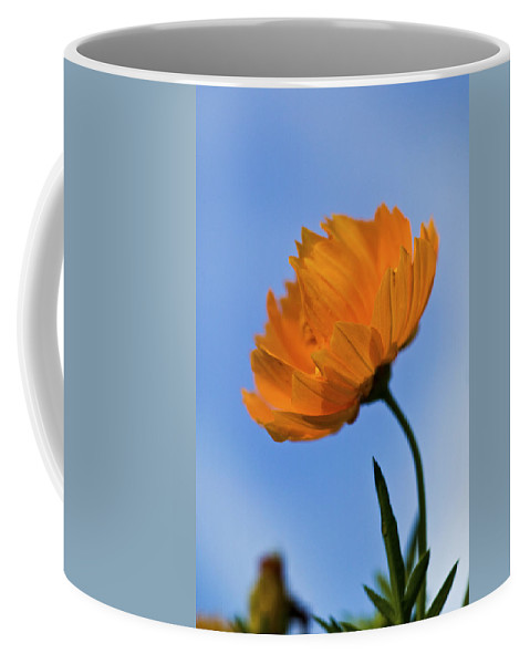 Cosmos Coffee Mug featuring the photograph Looking Sideways by Rich Franco