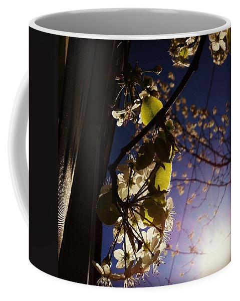Tree Coffee Mug featuring the photograph Looking Straight Up And Out Our Window by Katie Cupcakes