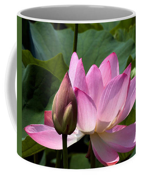 Nature Coffee Mug featuring the photograph Lotus Bud--here Is How You Do It Dl065 by Gerry Gantt