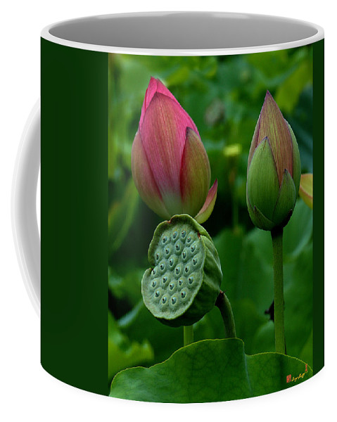 Nature Coffee Mug featuring the photograph Lotus-generations IIi Dl031 by Gerry Gantt