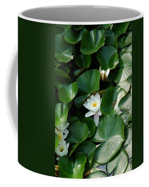 Usa Coffee Mug featuring the photograph Lotus by LeeAnn McLaneGoetz McLaneGoetzStudioLLCcom