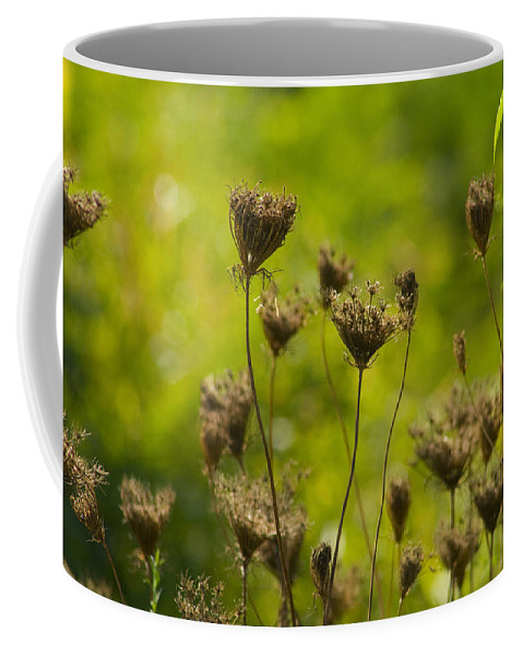 Daucus Carota Coffee Mug featuring the photograph Loveliness In Death by Kathy Clark