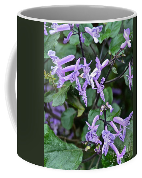 Flowers Coffee Mug featuring the photograph Lovely In Lavender by Carol Bradley