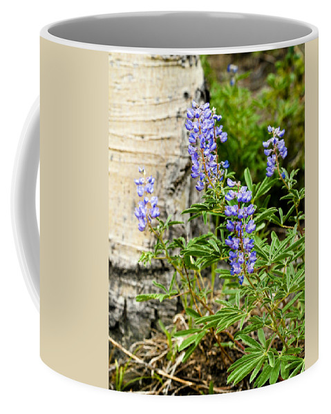 Lupine Coffee Mug featuring the photograph Lovely Lupine by Marilyn Hunt