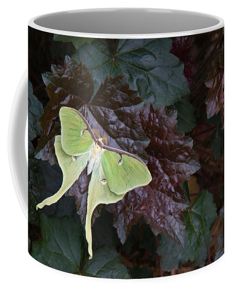 Rhododendron Coffee Mug featuring the photograph Luna Moth 1 by Douglas Barnett