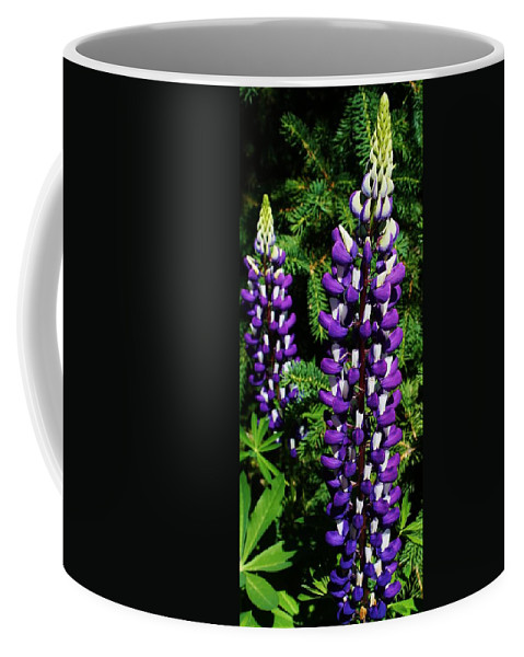 Flora Coffee Mug featuring the photograph Lupines by Bruce Bley