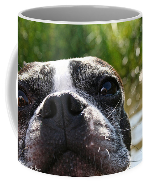 Outdoors Coffee Mug featuring the photograph Luv A Mug by Susan Herber