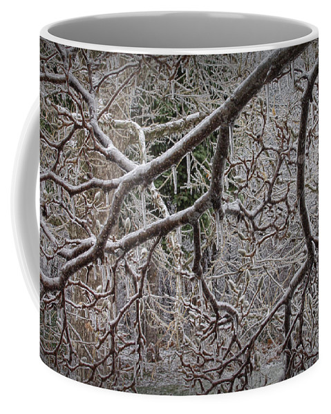 Art Coffee Mug featuring the photograph Magnolia Tree Branches Covered With Ice No.3834 by Randall Nyhof