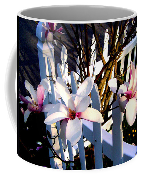 Picket Fence Coffee Mug featuring the photograph Magnolis's On A Picket Fence by Cynthia Amaral
