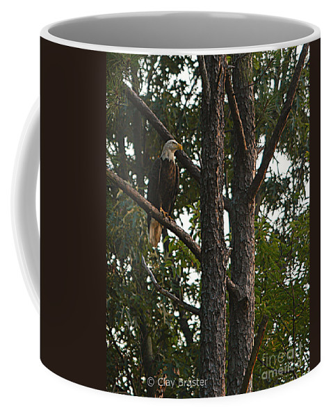 All Rights Reserved Coffee Mug featuring the photograph Majestic Bald Eagle by Clayton Bruster