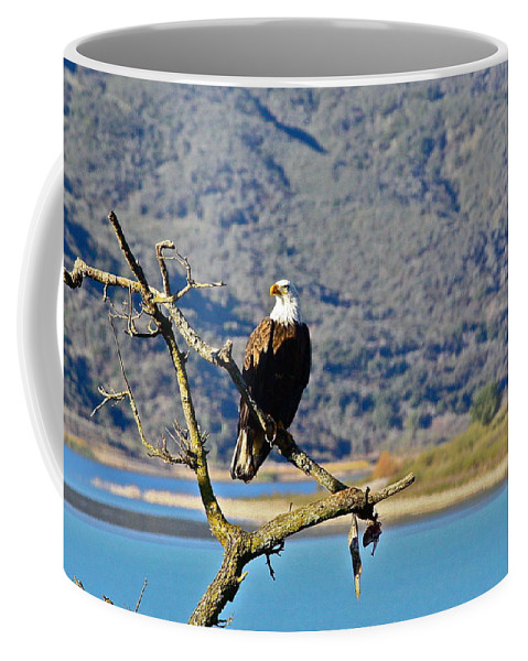 Birds Coffee Mug featuring the photograph Majestic Eagle by Diana Hatcher