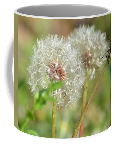 Wish Coffee Mug featuring the photograph Make A Wish by Maria Urso