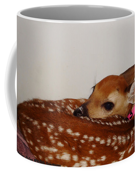Deer Photographs Coffee Mug featuring the photograph Make Maybelline Jealous by Art Dingo