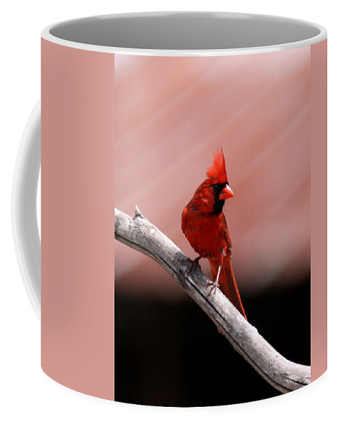 Cardinal Coffee Mug featuring the photograph Male Cardinal by Travis Truelove