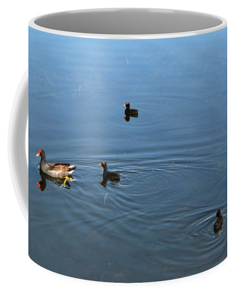 Bird Coffee Mug featuring the photograph Mama And Her Babies by Mickey Krause