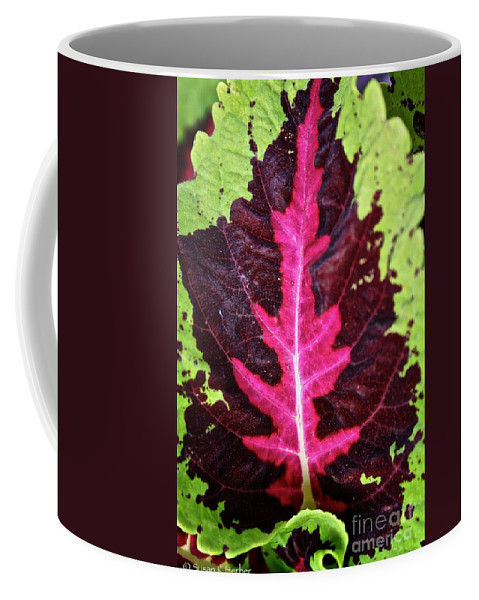 Plant Coffee Mug featuring the photograph Many Leaves Of Coleus by Susan Herber