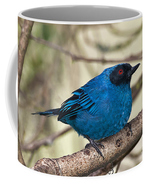 Animal Coffee Mug featuring the photograph Masked Flowerpiercer by Jean-Luc Baron