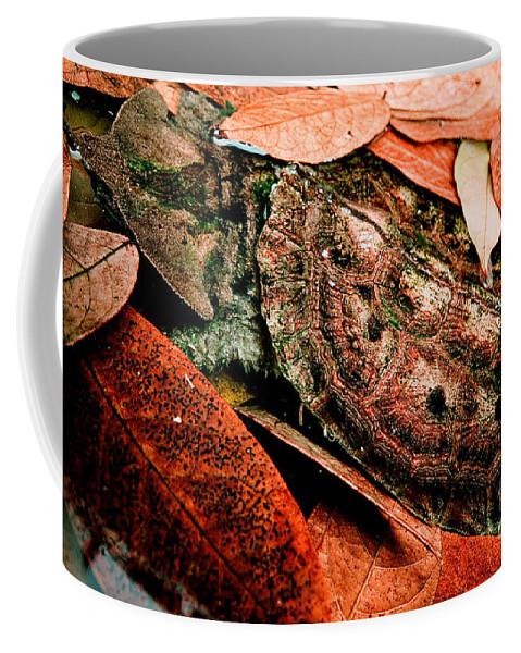 Matamata Turtle Coffee Mug featuring the photograph Mata Mata Turtle by Dant� Fenolio