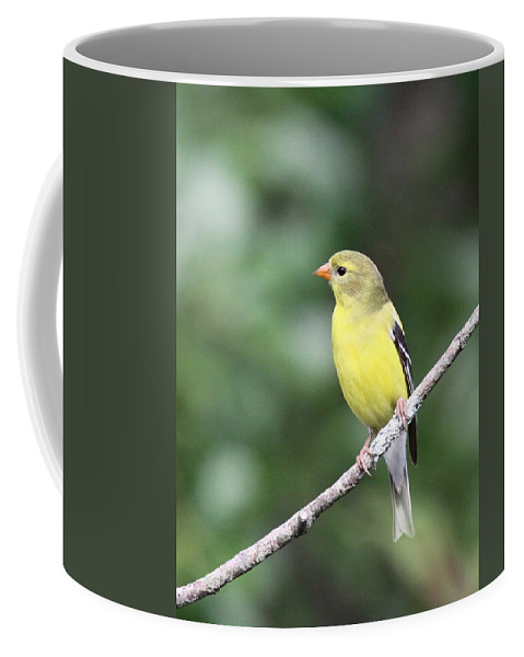 Goldfinch Coffee Mug featuring the photograph Mellow Lady by Travis Truelove