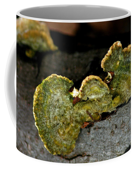 Chicago Coffee Mug featuring the photograph Michigan Jade Fungus by LeeAnn McLaneGoetz McLaneGoetzStudioLLCcom