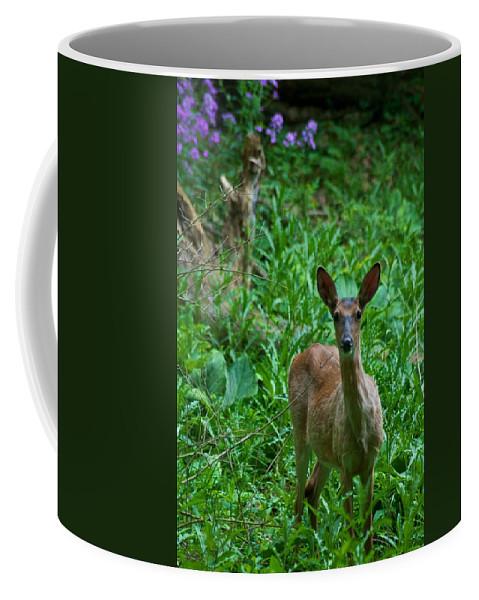 Animal Coffee Mug featuring the photograph Michigan Whitetail 7344 by Michael Peychich