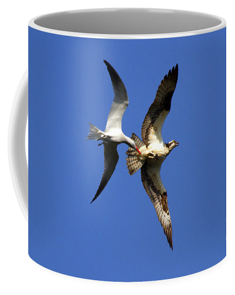 Birds Coffee Mug featuring the photograph Mid-air Attack by Mike Dawson