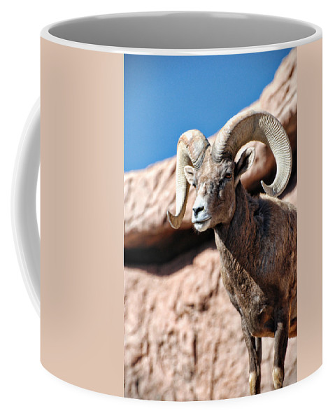 Big Horn Sheep Coffee Mug featuring the photograph Mighty Big Horns You Have by Saija Lehtonen