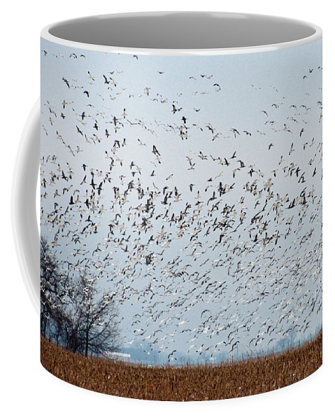 Birds Coffee Mug featuring the photograph Migration by David Arment
