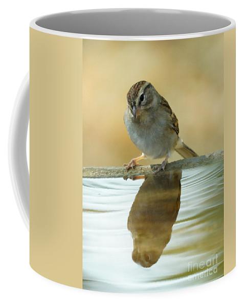 Birds Coffee Mug featuring the photograph Mirror Mirror by Lori Tordsen