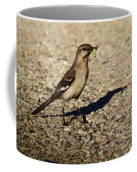 Birds Coffee Mug featuring the photograph Mockingbird Meal by Diana Hatcher