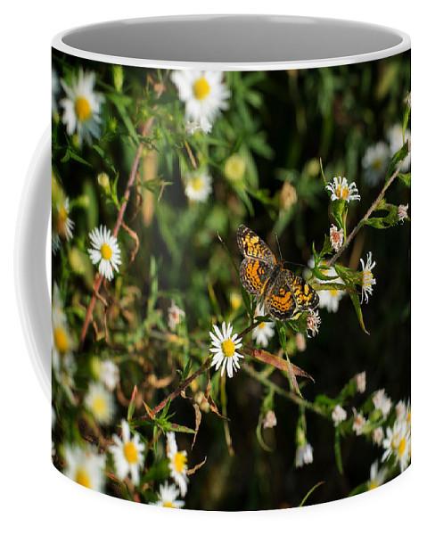 Butterfly Coffee Mug featuring the photograph Monarch by Scott Wyatt