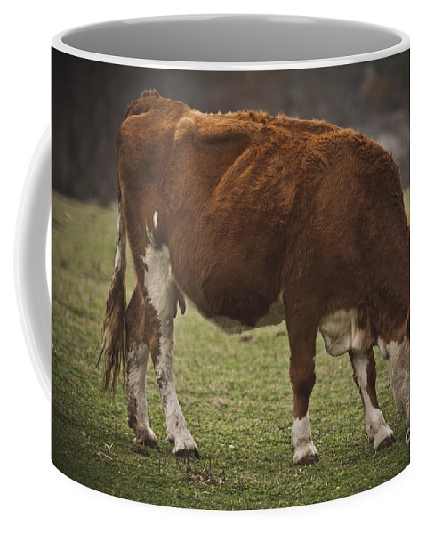 Cows Coffee Mug featuring the photograph Moo Moo Cow by Kim Henderson