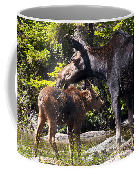 Moose Coffee Mug featuring the photograph Moose Brunch by Glenn Gordon