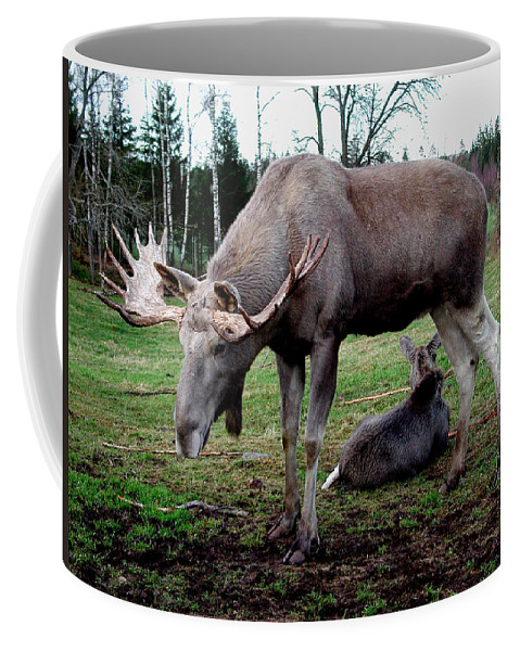 Colette Coffee Mug featuring the photograph Moose Rest by Colette V Hera Guggenheim