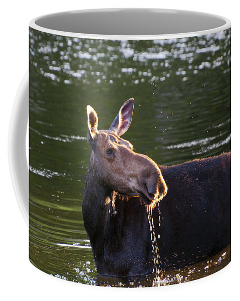 Moose Coffee Mug featuring the photograph Morning Drinks by Glenn Gordon