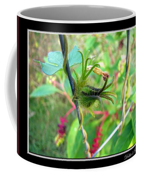 Botanical Coffee Mug featuring the photograph Morning Glory Macro by Debbie Portwood