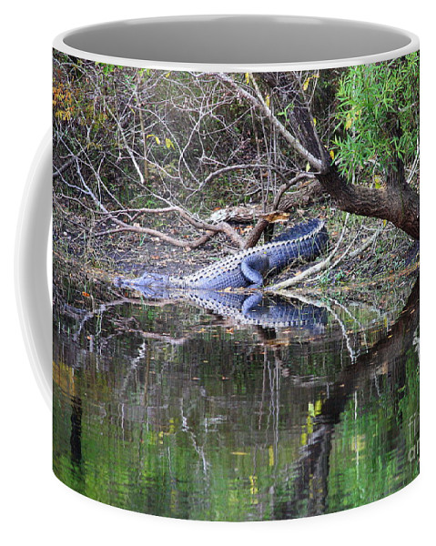 Florida Gator Coffee Mug featuring the photograph Morris Bridge Gator by Carol Groenen