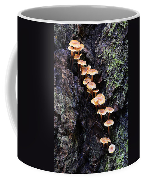 Mushrooms Coffee Mug featuring the photograph Mushroom Parade by Bob Christopher