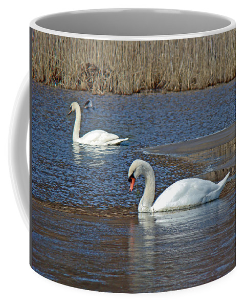 Swan Coffee Mug featuring the photograph Mute Swans On A Cape Cod Pond - Cygnus Olor - Quissett Massachusetts by Mother Nature